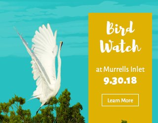 Example web banner ad for a Bird Watch event at Murrells Inlet.