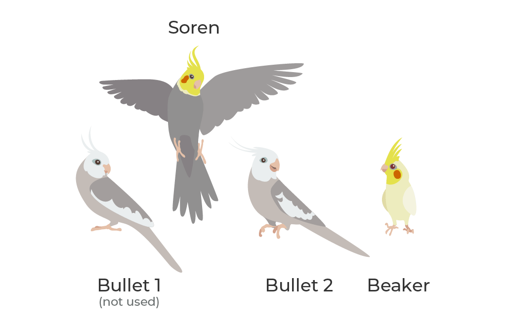 Illustrated characters, the birds of the Lee family.